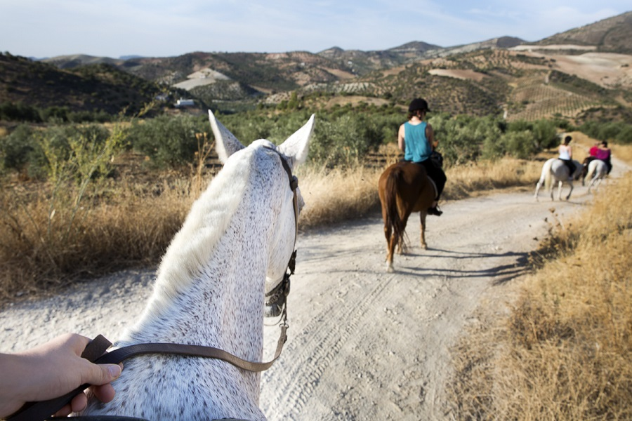 Nature horseback riding